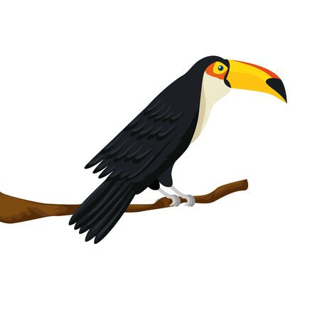 toucan animal exotic in branch isolated icon vector illustration design