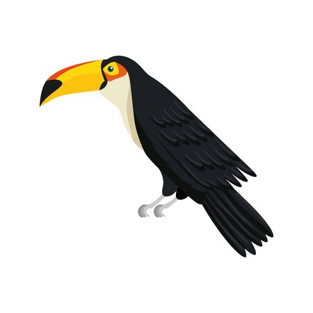 toucan animal exotic isolated icon vector illustration design