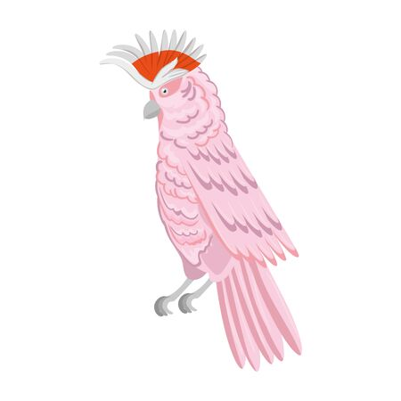 parrot pink animal exotic isolated icon vector illustration design