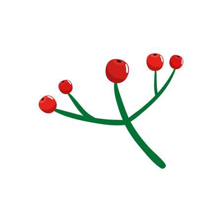 branch with holly fruits traditional christmas isolated icon vector illustration design
