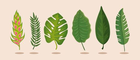 set of flower heliconia with leafs isolated icon vector illustration design