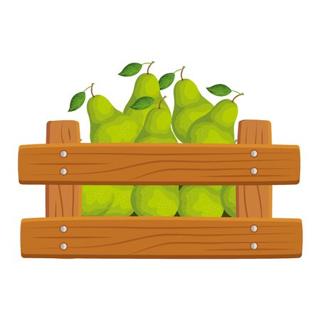 fresh pears fruits in wooden box vector illustration design