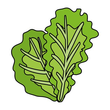 fresh lettuce vegetable healthy icon vector illustration design