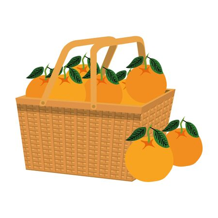 fresh oranges fruits in straw basket vector illustration design