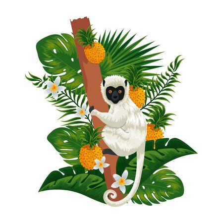 tropical capuchin monkey in pineapple plant and leafs vector illustration design