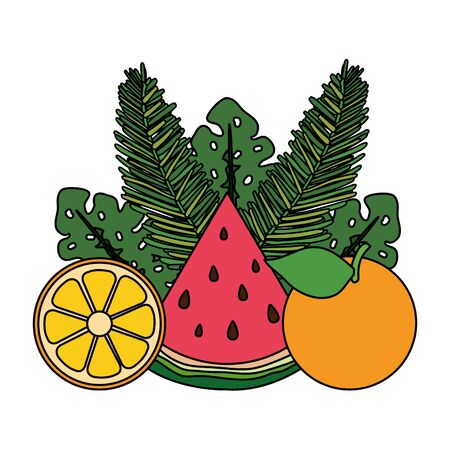 orange and watermelon with leafs palms vector illustration design