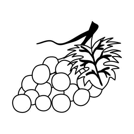 fresh grapes fruits nature icon vector illustration design