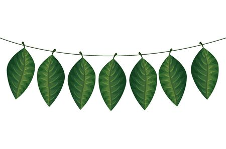 set of leafs tropicals hanging vector illustration design