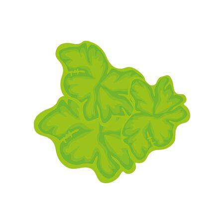 lettuce leaves fresh vegetable isolated icon vector illustration design 向量圖像