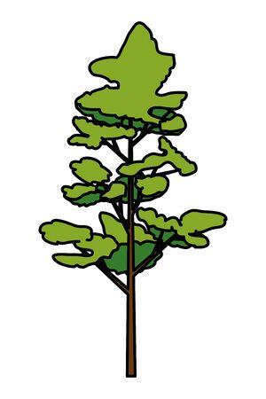 pine coniferus tree isolated icon vector illustration design 向量圖像
