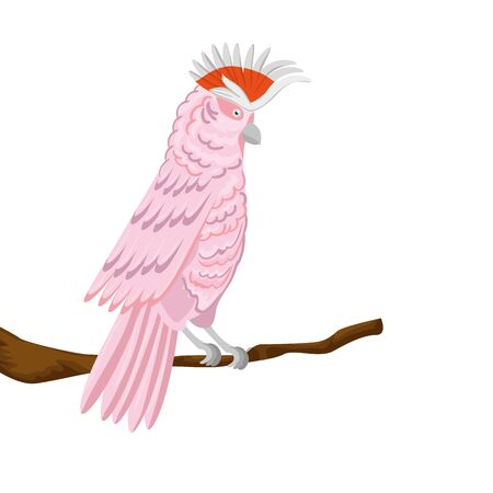 parrot pink animal exotic in branch isolated icon vector illustration design