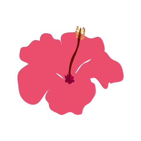 flower natural of pink color isolated icon vector illustration design  イラスト・ベクター素材