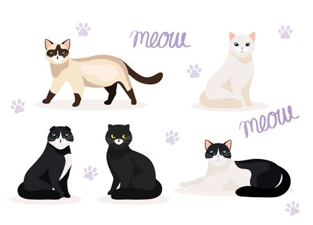 group of cute cats animals vector illustration design