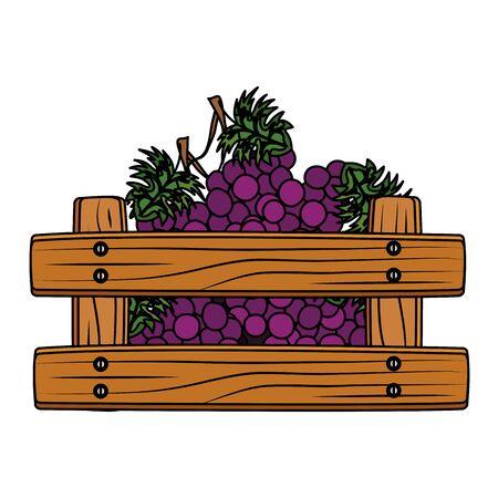 fresh grapes fruits in wooden box vector illustration design