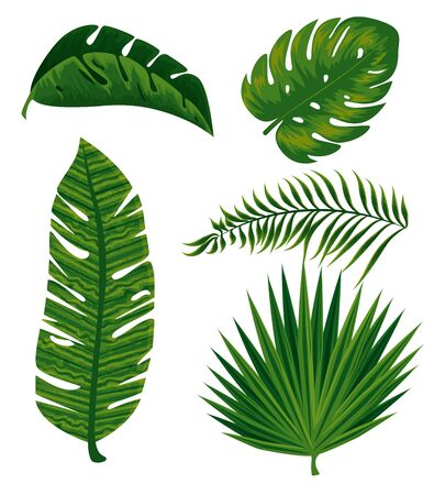set tropical branches leaves plants vector illustration