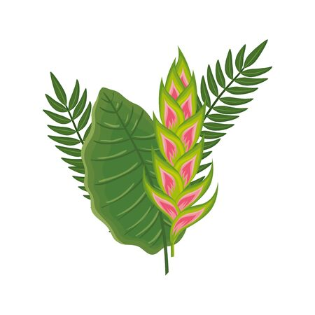 flower heliconia with leafs isolated icon vector illustration design 일러스트