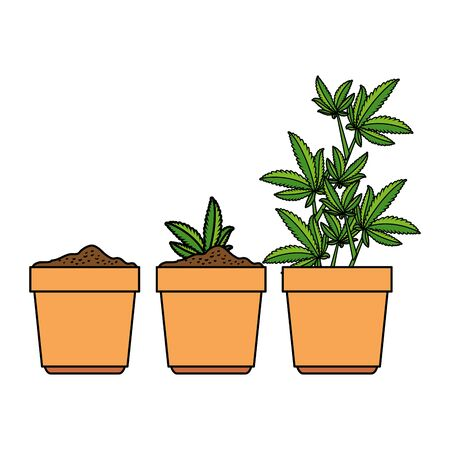 cannabis plants in pots group vector illustration design Illustration