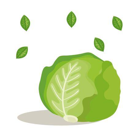 fresh lettuce vegetable with leafs vector illustration design