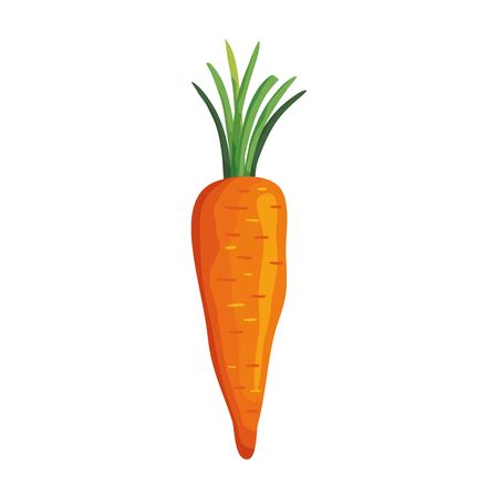 fresh carrot vegetable isolated icon vector illustration design
