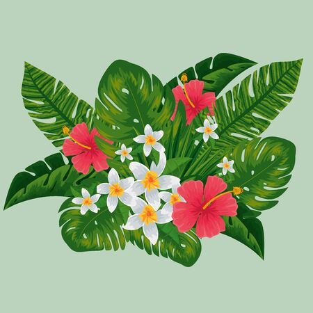 exotic flowers plants with nature leaves vector illustration Иллюстрация