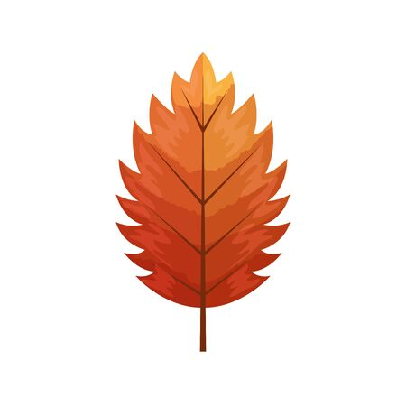 autumn leaf or fall foliage on white background vector illustration design