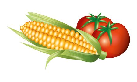 tomato and corn design, Vegetable organic food healthy fresh natural and market theme Vector illustration