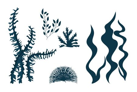 seaweeds, ocean plants, underwater planting, aquatic plants, nature wildlife vector illustration design 일러스트