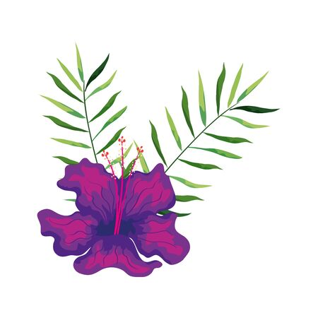 hibiscus beautiful purple color with branches and leaves, tropical nature, spring summer botanical vector illustration design