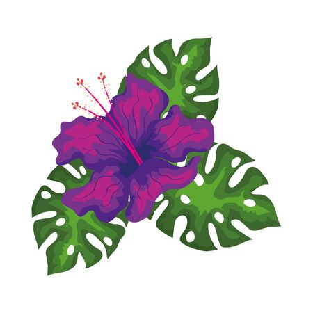 hibiscus beautiful purple color with leaves, tropical nature, spring summer botanical vector illustration design