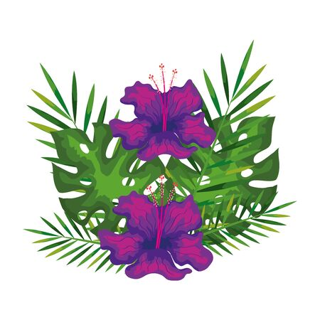 hibiscus flowers purple color with branches and leaves, tropical nature, spring summer botanical vector illustration design Vectores