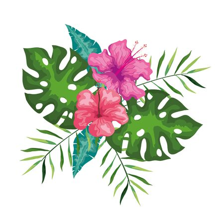 hibiscus flowers pink color with branches and leaves, tropical nature, spring summer botanical vector illustration design Vectores