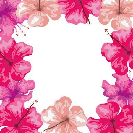 frame of hibiscus flowers pink color, tropical nature, spring summer botanical vector illustration design Vectores