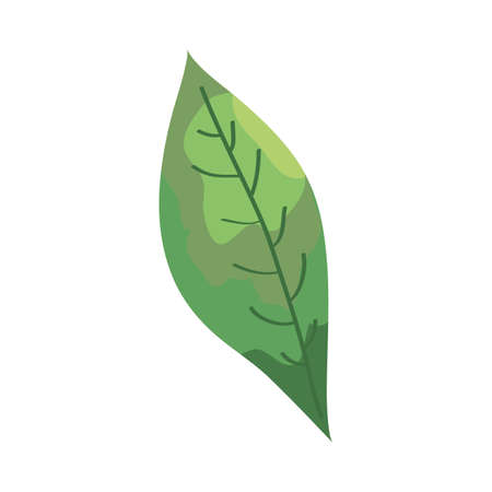 leaf plant ecology isolated icon vector illustration design