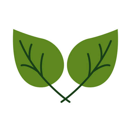 leafs plant organic flat style vector illustration design