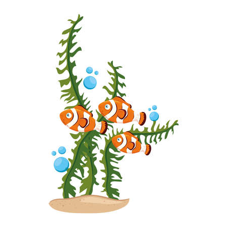 sea underwater life, anemone fishes with seaweed, clown fishes on white background vector illustration design