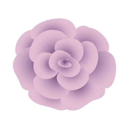 beautiful rose flower plant isolated icon vector illustration design