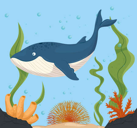 blue whale and life marine in ocean, seaworld dwellers, cute underwater creatures, undersea fauna vector illustration design