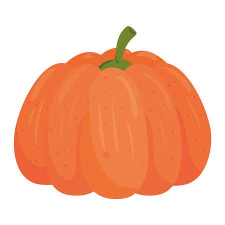 fresh pumpkin, in white background vector illustration design Ilustração Vetorial