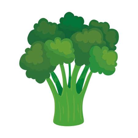 fresh broccoli vegetable, on white background vector illustration design Vetores