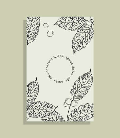 Coffee leaves with beans on paper frame design of time drink breakfast beverage shop morning store aroma and caffeine theme Vector illustration Illusztráció