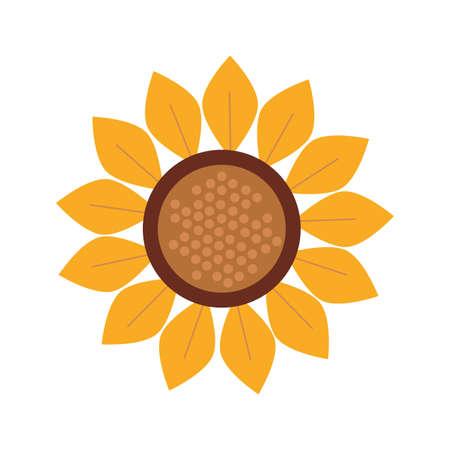 autumn sunflower seasonal isolated icon vector illustration design Vektorové ilustrace