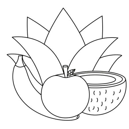 Banana apple and coconut design, Fruit healthy organic food sweet and nature theme Vector illustration