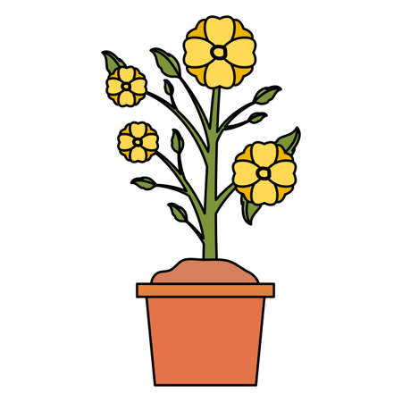 potted flowers decoration gardening flat design vector illustration