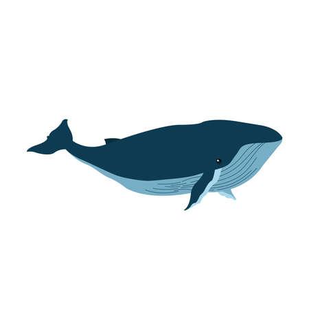 whale animal design Sea life ecosystem fauna and ocean theme Vector illustration