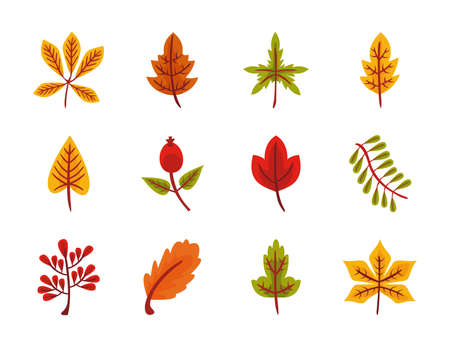bundle of twelve autumn leaves flat style icons vector illustration design