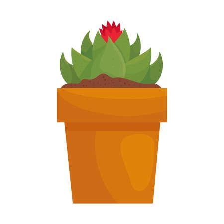 flower on cactus plant inside pot design of Floral nature garden ornament botany decoration beauty and flora theme Vector illustration