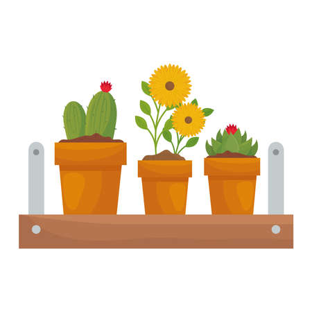 Plants and flowers inside pots on shelf design of Floral nature garden ornament botany decoration beauty and flora theme Vector illustration