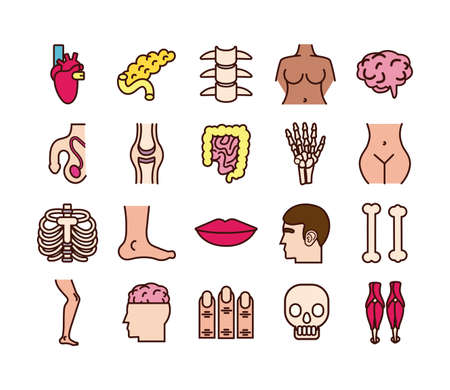 bundle of body parts and organs icons vector illustration design Illustration