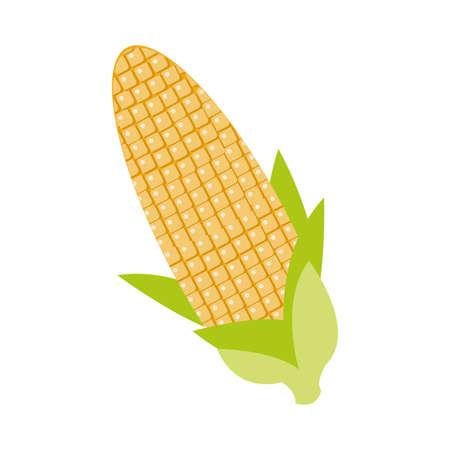 corn cob flat detailed style vector illustration design 矢量图像