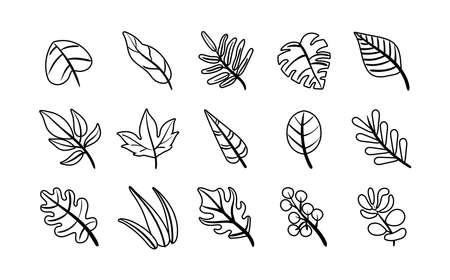 bundle of leafs plants set icons vector illustration design